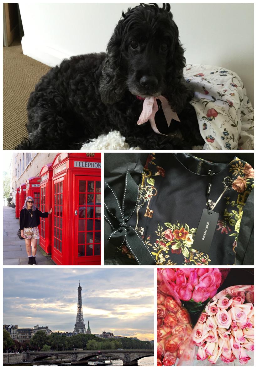 Cocker spaniel chanel london dolce gabbana floral dress